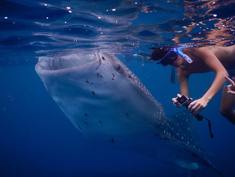 CEBU BLUE OCEAN ACADEMY くさじま様留学体験談4